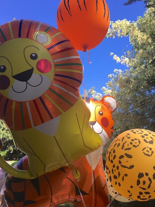 Lion and Tiger Party Balloons by Northstar Balloons for a safari party.
